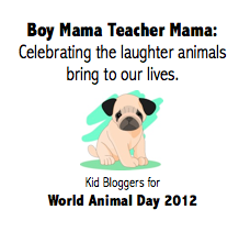 Boy Mama Teacher Mama: Celebrating the Laughter that Animals Bring to Our Lives