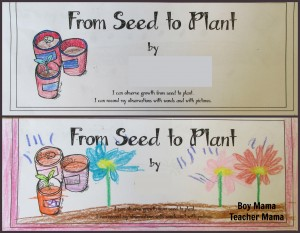Boy Mama Teacher Mama | From Seed to Plant Booklet