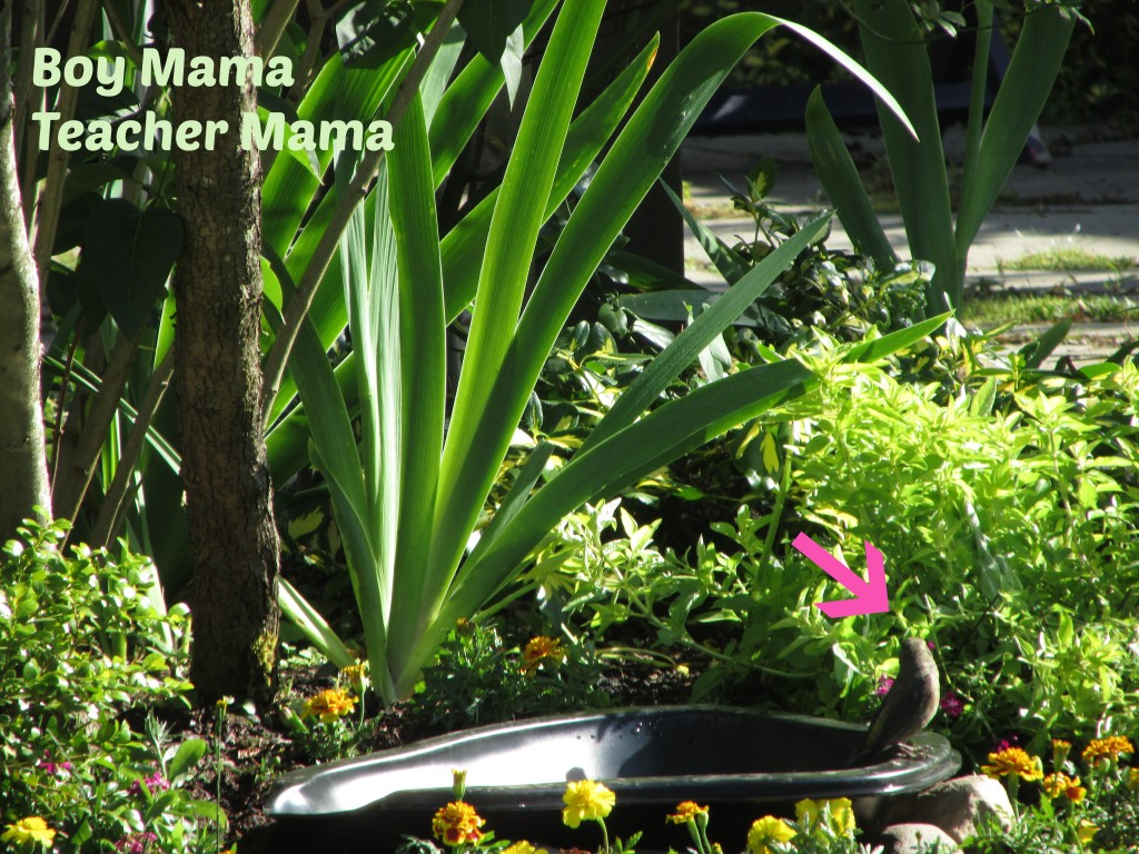Boy Mama Teacher Mama | Easy Backyard Bird Bath
